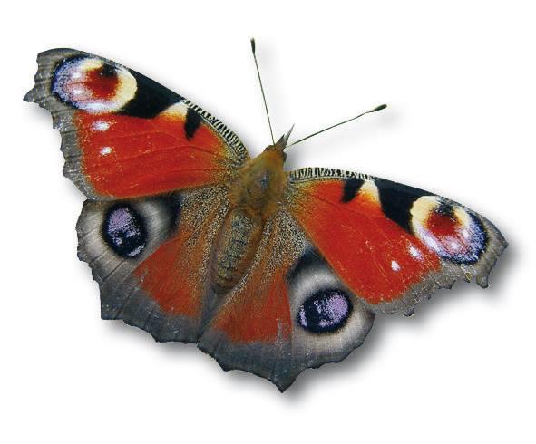 Vlinderstichting